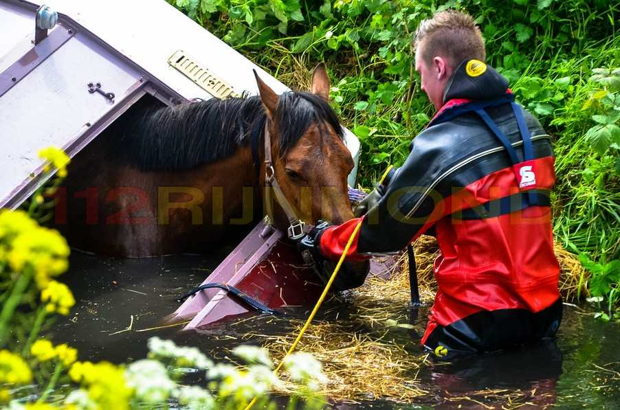 Trailer met paard raakt te water, paard overleden ...